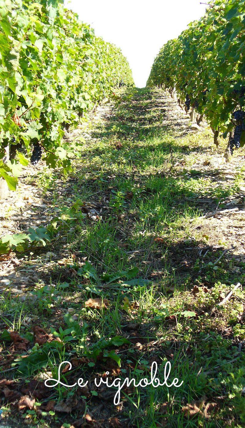 domaine-garnier-vignes